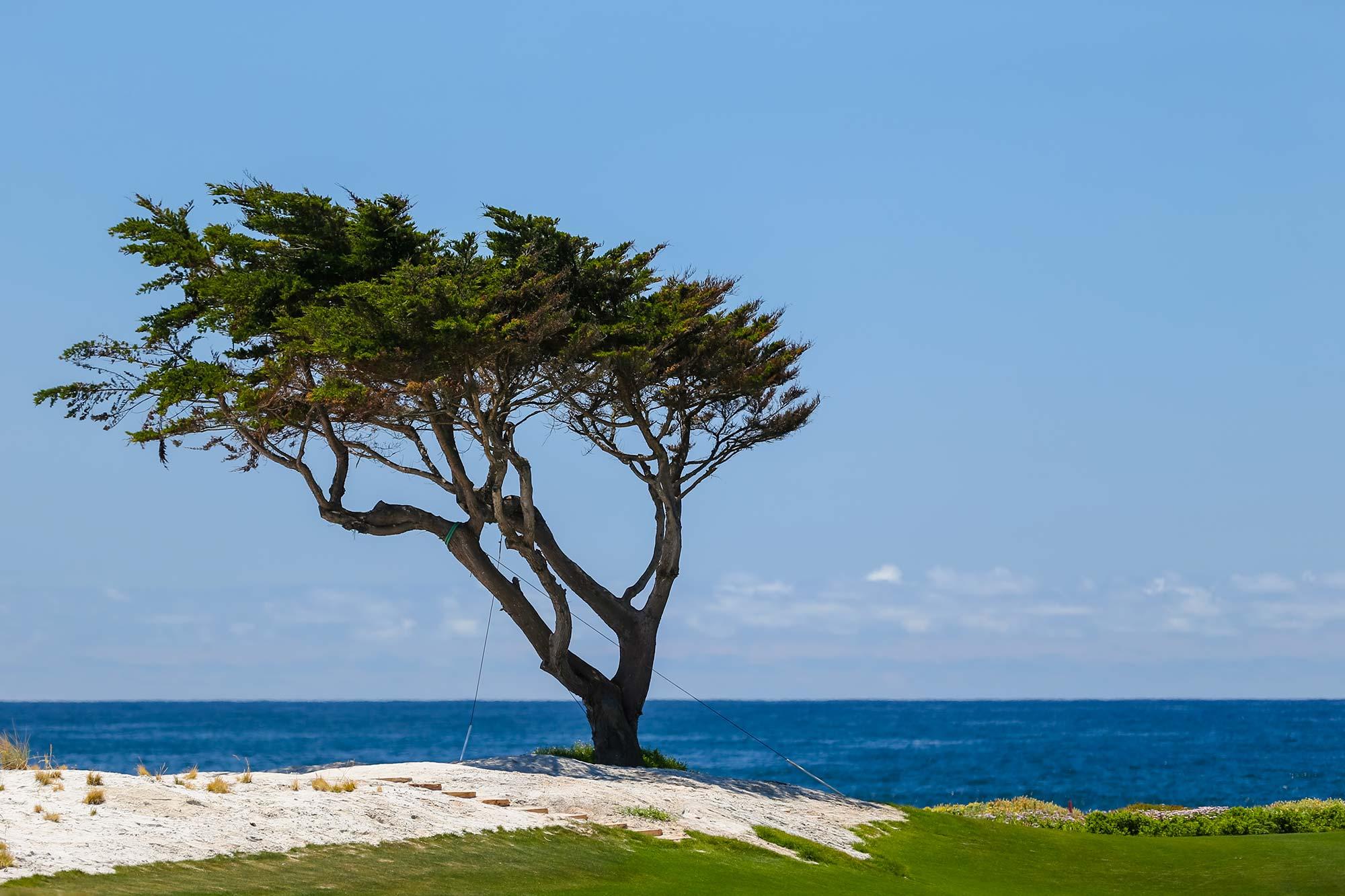 A view of Pebble Beach Golf Course